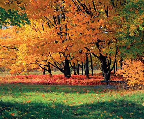 Listy javoru se ale staly historickým symbolem Kanady už zhruba sto let předtím, když v roce 1860 posloužily jako dekorace při návštěvě země Eduardem VII., princem z Walesu.