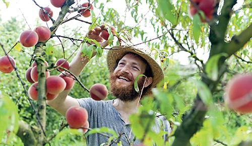 Při dobrém výběru plodin tak můžete sklízet košíky ovoce.