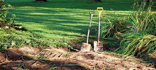 Při přípravě záhonu pro nové jahodiště nebo výsev špenátu po sklizeném česneku či cibuli se snažte, aby půda nezůstala dlouho holá.