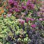 Pokud na zalévání zahrady nemáte dost času, vysaďte si suchovzdorné druhy trvalek.