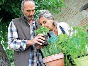 V minulosti měli naši předkové pro téměř každou bylinu nějaké využití, ať už v hospodářství nebo lidovém léčitelství.