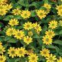 Letničky vybírejte robustní a odolné, které se snadno pěstují a pokvetou až do podzimu, třeba vitálku.