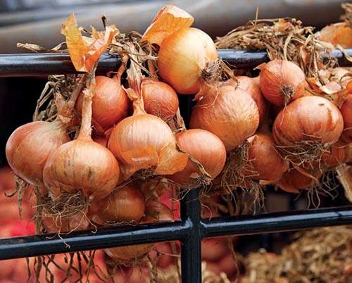 Zdánlivě obyčejná cibule rozhodně není jen tak tuctovou rostlinou