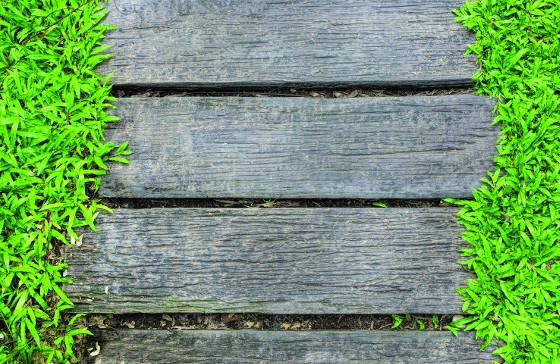 Dřevo do zahrady patří, hodí se i na stavbu cest.