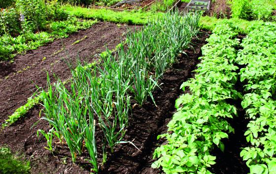 Střídmé hnojení ve správný čas - to by měla být zásada každého zahradníka.
