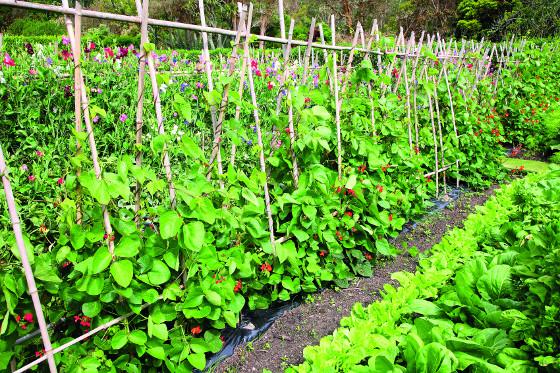 Konstrukce z prutů použijte pro drobnoplodé druhy zeleniny.