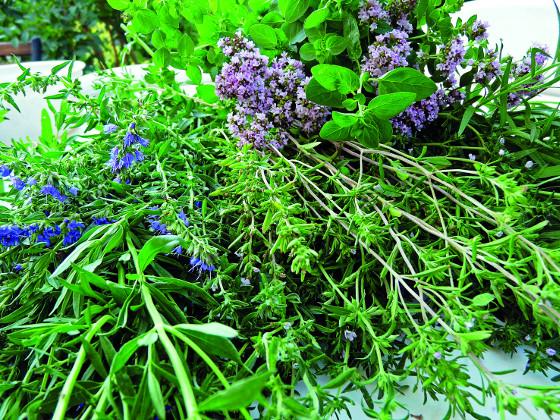 Bylinky lze pěstovat nejen v nádobách, ale také ve světlém podrostu jedlého lesa