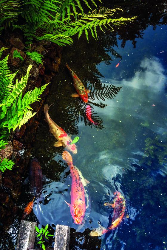 Ryby můžete chovat v jezírku, které má hloubku alespoň jeden a půl metru