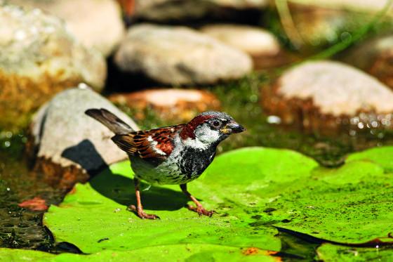 Ptáci ocení mělčinu a pozvolný břeh, kde se mohou napít
