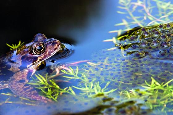 Když do jezírka nakladou žáby vajíčka, vypněte filtr