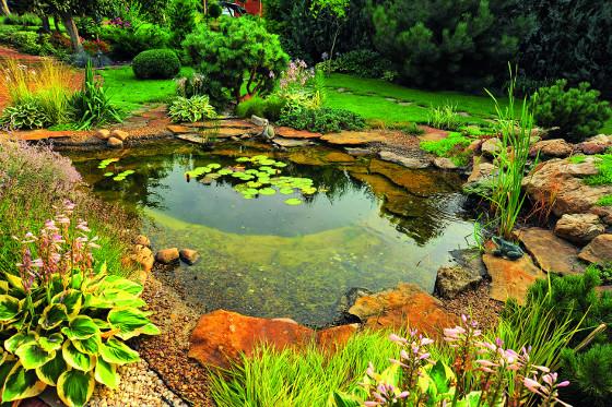 Čím více rostlin na březích jezírka, tím snáze udržíte vodu čistou