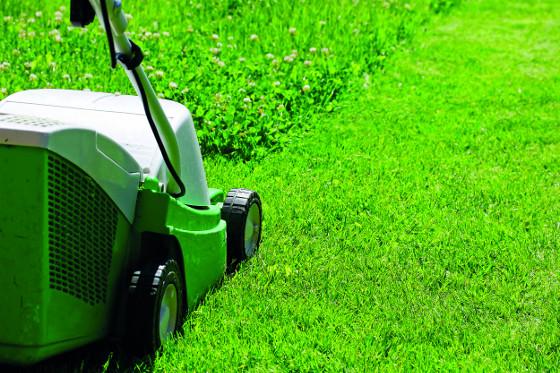 Při seči zanedbaného trávníku neodstraňujte více jak jednu třetinu jeho výšky