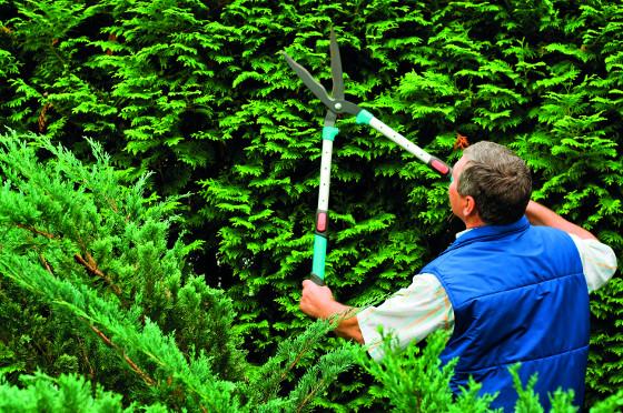 Při práci ve výškách oceníte plotové nůžky s teleskopickou rukojetí