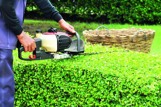 Plotostřih pomůže při řezu větších živých plotů a stěn