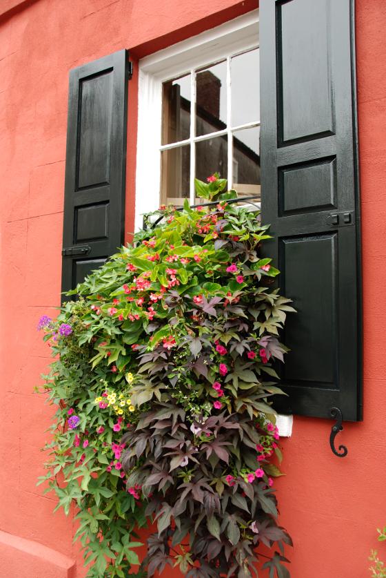Bíle kvetoucí pokojové begónie, světle zelené listy syngónia, splývavá voděnka s fialovými listy, kapradina ledviník a fialově kvetoucí šalvěj lesní. Elegantní a svěží kombinace na stinnější místo.