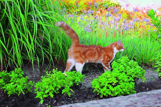 Chcete-li zabránit kočce, aby si udělala ze záhonu toaletu, udržujte zem neustále mírně vlhkou.