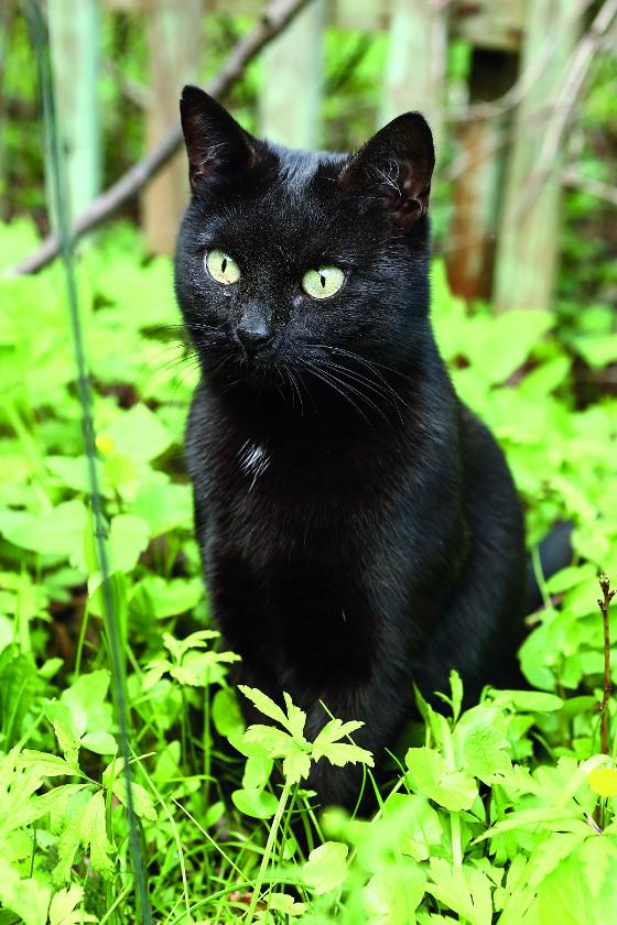 Chcete-li zabránit kočce, aby si udělala ze záhonu toaletu, udržuje zem neustále mírně vlhkou.