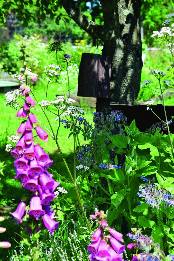 Pestré barvy zdobí zahradu během léta