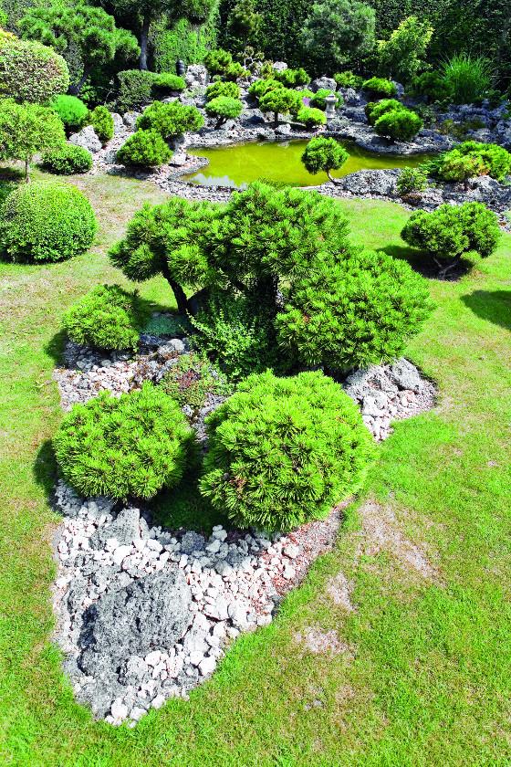 Stromy jsou v zahradě vysazené tak, aby kolem nich majitel mohl projet se sekačkou.