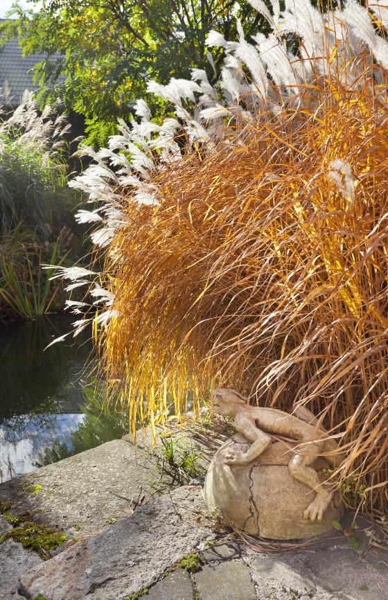 Okolí jezírka je osazené travinami, které na podzim mění barvu a krásné vydrží přes celou zimu.