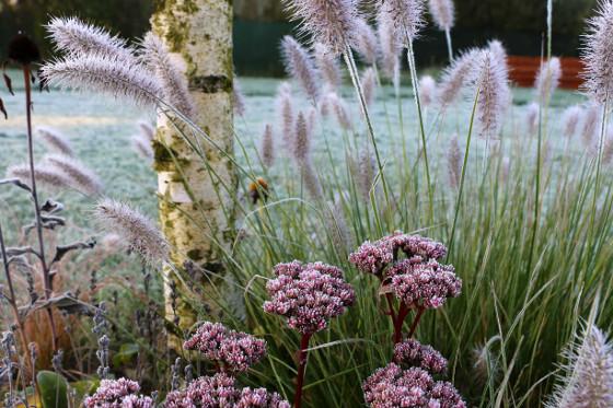 Do zahrady byla vysazená i bříza, která se běžně vyskytuje podél okolních cest a lesů.