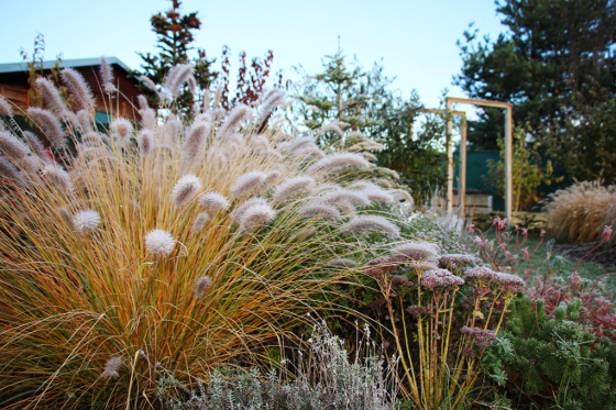 Traviny jsou vděčné hlavně v zimním období, kdy jejich stébla pokrytá námrazou nebo sněhem vypadají krásně.