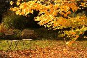 Spadané listí není žádná přítěž, jedná se totiž o skvělý zdroj užitečných živin pro zahradu.