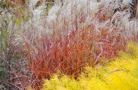 Barevná škála a pestrost velikostí a růstových forem okrasných trav, umožňuje jejich využití v různých typech zahrady.