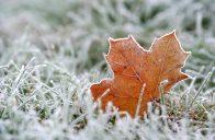 Jakmile přijdou vytrvalé mrazy, omezte či úplně vylučte pohyb po trávníku.