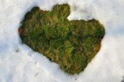 Pohyb po trávníku v zimním období přináší velké riziko trávníkových plísní, které se začnou objevovat na jaře.