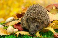 Mnoho druhů živočichů patří mezi vítané hosty naší zahrady.