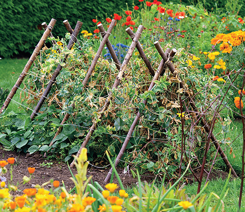 Kombinování květinových a zeleninových záhonů, tzv. smíšená výsadba.