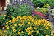 Předzahrádka vytvořená převážně z trvalek vynikne pestrými barvami zejména v letním období.