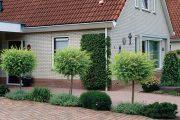 Zpevněné plochy střídané se záhony v sobě spojují praktické i estetické využití prostoru.
