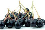 Zvláštností těchto plodů je vysoký obsah rutinu v různých formách, který pomáhá upevňovat a rozšiřovat cévy.