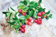 Brusinky a klikva obsahují prospěšné přírodní antioxidanty.
