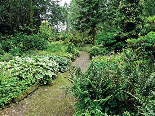 V jehličnaté podrostu se uplatní rostliny se zajímavou strukturou i barevným odstínem listů.