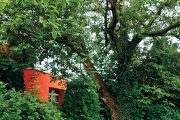 Nejstarší dřevinou na zahradě je mohutný stoletý ořešák královský (Juglans regia), který celému prostoru dominuje.
