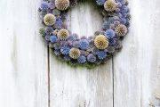 Bělotrn modrý je rostlina podobná bodláku,