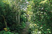 V zahradě jsou vysazené domácí i introdukované rostliny, které jsou nejen pěkné, ale i užitečné pro živočichy.