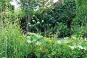 Na malém pozemku vládne bujná vegetace, která poskytuje útočiště mnoha živočišným druhům.