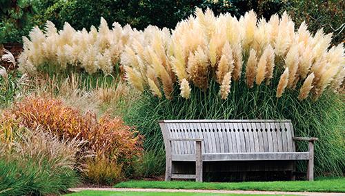 Zátiší s okrasnými trávami je v listopadu velmi pěkné.