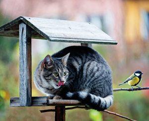Pozorování ptáků na krmítku se může stát vyhledávanou kratochvílí pro vás i děti.