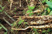Několik rostlin nechte na záhonu – příští rok vykvetou a přivábí užitečný hmyz.