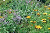 Kvetoucí rostliny mají v permakulturní zahradě vždy i praktické využití – jako bylinky, léčivky nebo rostliny zlepšující půdu.