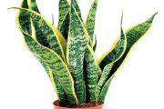 Pokojové rostliny js ou na počátku zimy ve stavu nejhlubšího spánku.