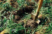 Ještě v prosinci můžete klidně rýt záhony, hloubit jámy, připravovat základy pro skalku či zarývat zelené hnojení.