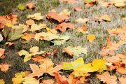 Podzim bývá dlouhý, a tak listí ze stromů opadává postupně.