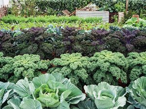 Maximálně využitá plocha záhonů s bohatou úrodou – takový by měl být pohled na zahrádku po většinu pěstitelské sezony.