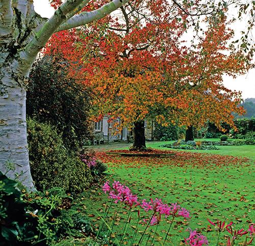 Solitérní dřeviny do zahrad